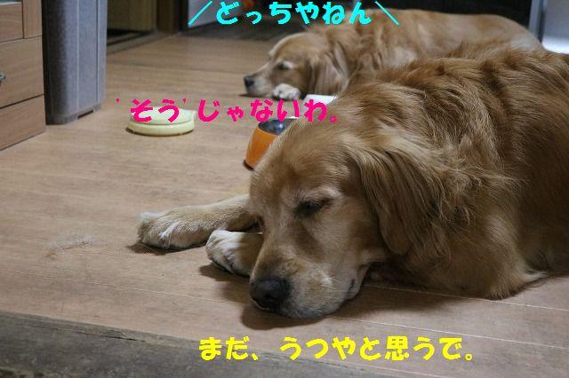 IMG_9255.jpg