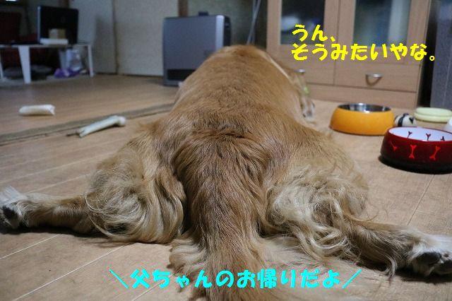 IMG_9260.jpg