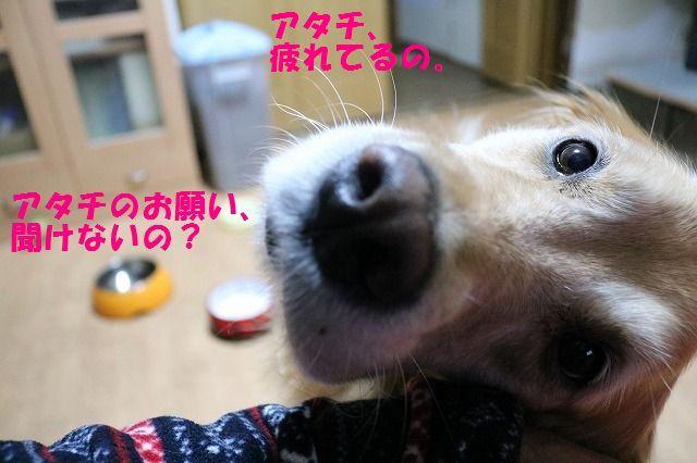 IMG_9331a.jpg