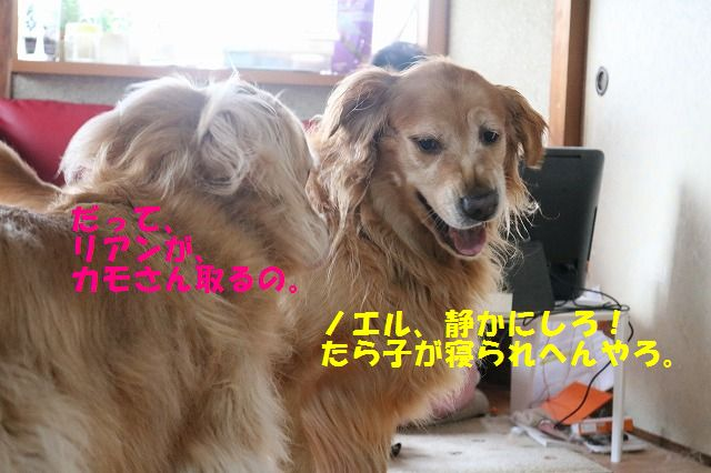 IMG_9692.jpg