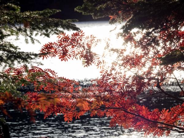 白駒の池 E