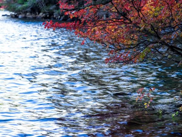 白駒の池 I