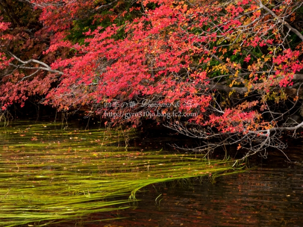白駒の池 A