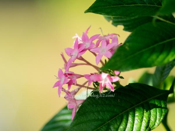 昭和記念公園の花 B