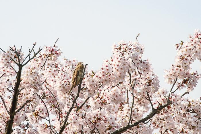 arisui202.jpg