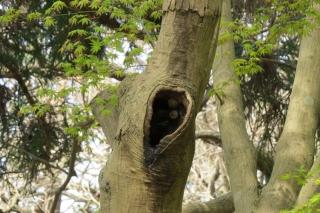160323015 樹洞で見かけたカタツムリ
