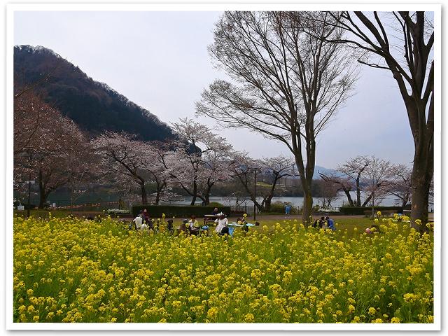 花見☆城山公園