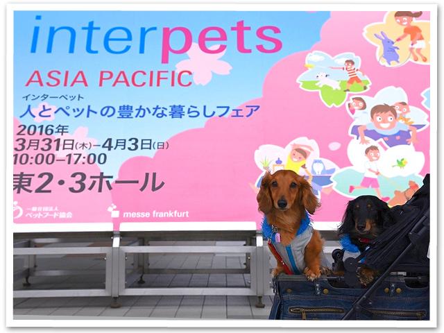 Interpets☆ビッグサイト
