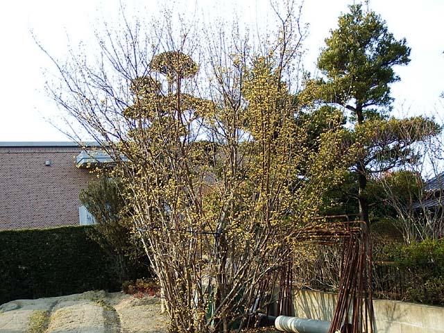 山茱萸(さんしゅゆ)(129377 byte)