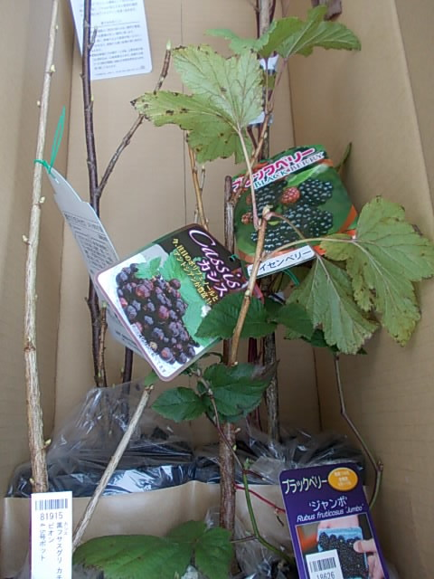 Berries 20151122