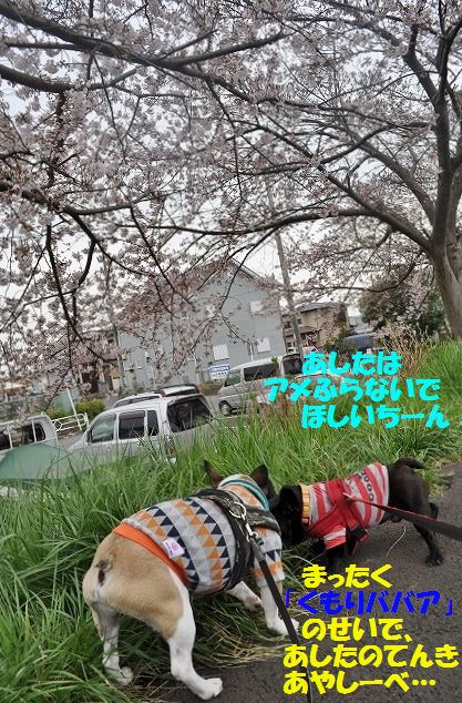 DSC_0004_201604040926234d9.jpg