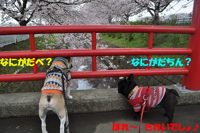 DSC_0013_20160404092628487.jpg
