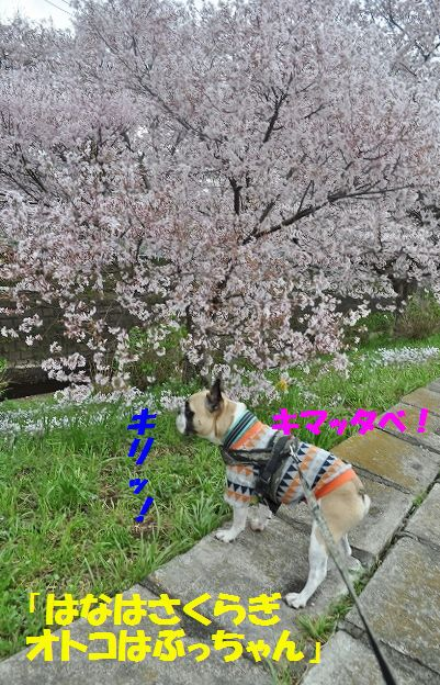 DSC_0015_20160404092629f2c.jpg