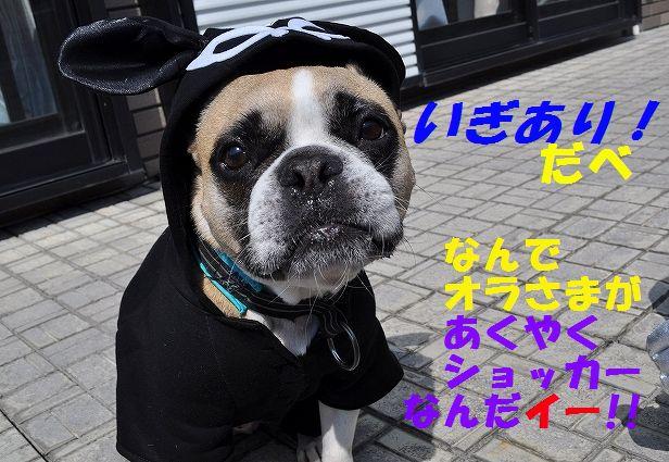 DSC_0020_20160328133218422.jpg