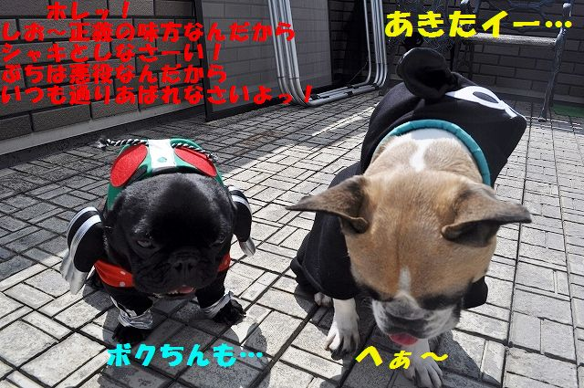 DSC_0033_201603281359186e1.jpg