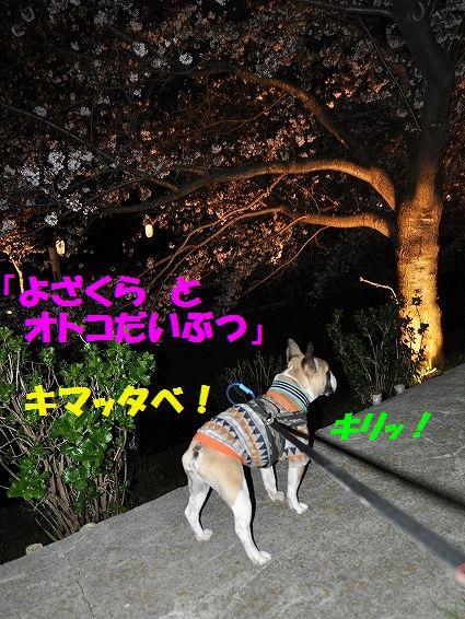 DSC_0042_20160404134141b9b.jpg