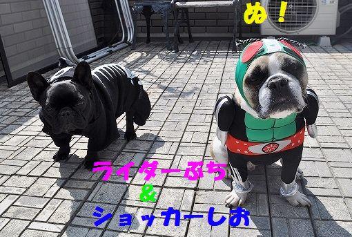 DSC_0047_201603291350424c4.jpg