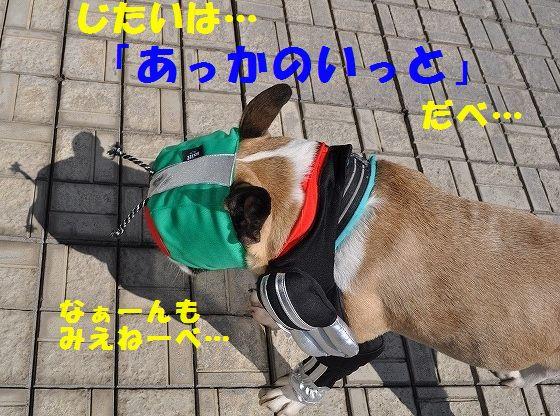 DSC_0070_201603291501432b6.jpg
