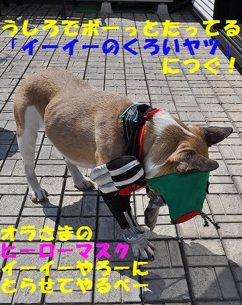 DSC_0072_20160329150144327.jpg