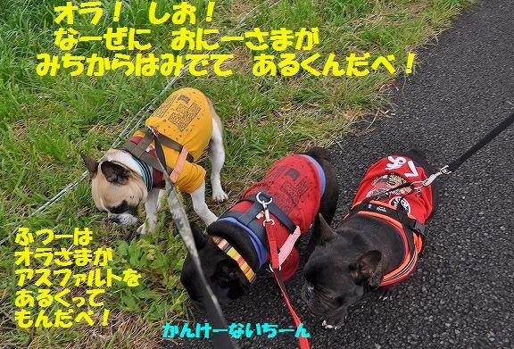 DSC_0082_20160406145705bc0.jpg