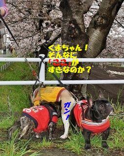 DSC_0096_20160407112516e8a.jpg