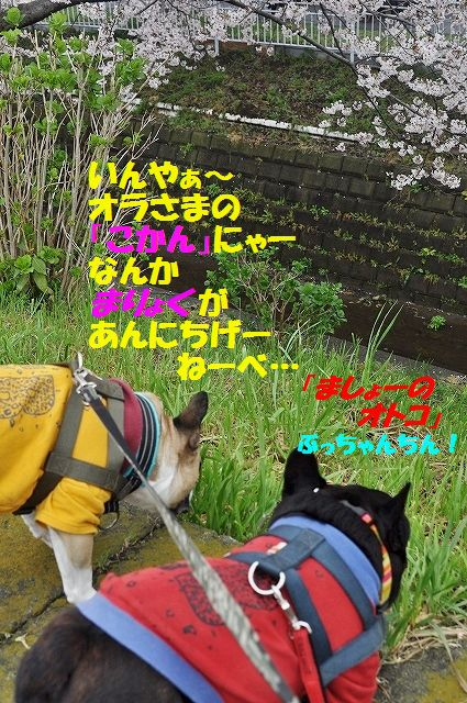 DSC_0138_20160407132732e87.jpg