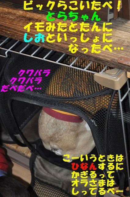 DSC_0186_20160408125111ff5.jpg