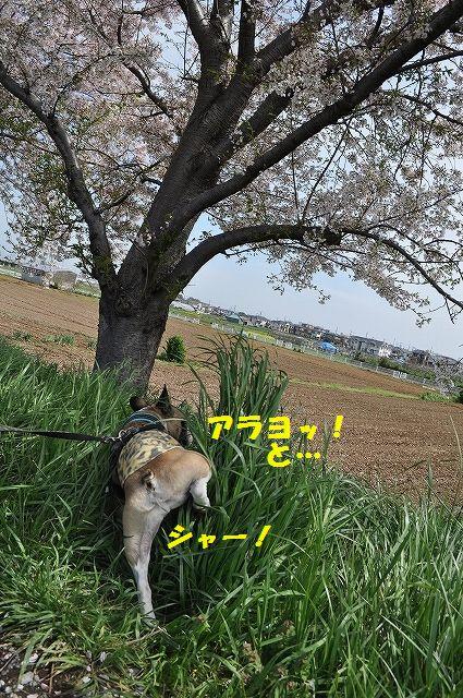 DSC_0207_20160411133724aec.jpg