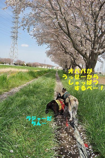 DSC_0219_20160411133730706.jpg