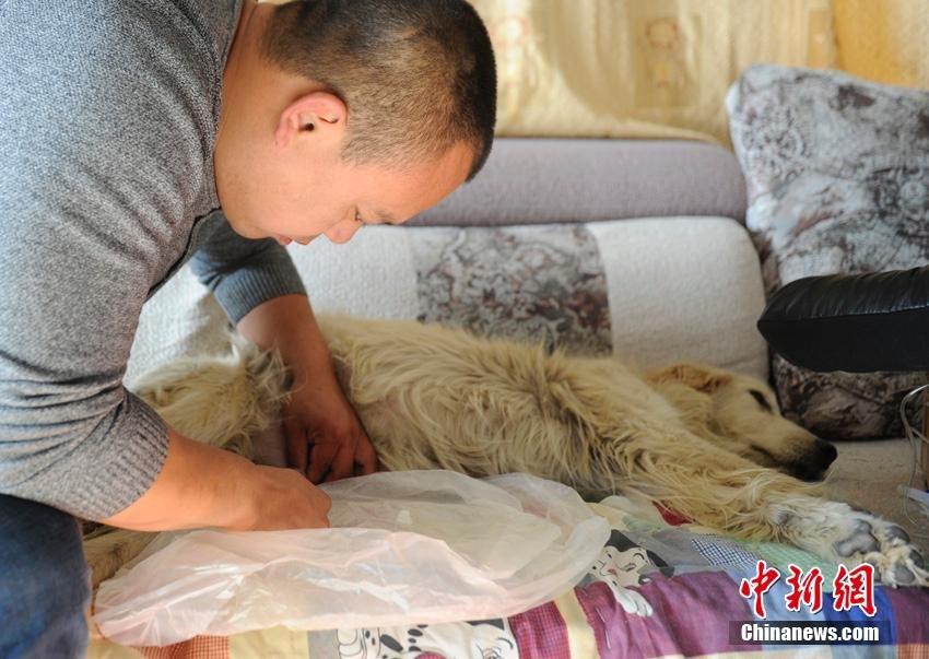 changchun-man-rescues-stray-dogs1.jpg