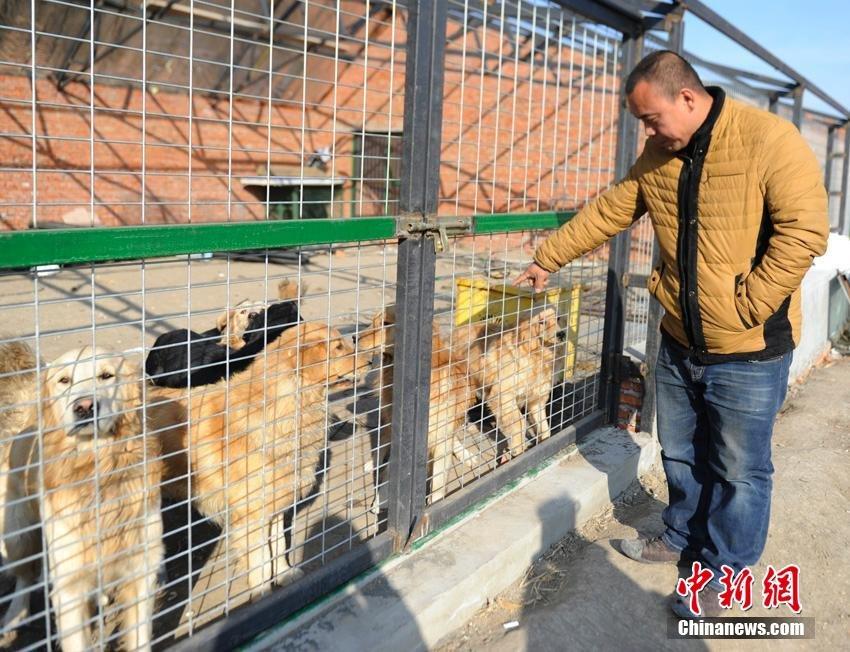 changchun-man-rescues-stray-dogs12.jpg