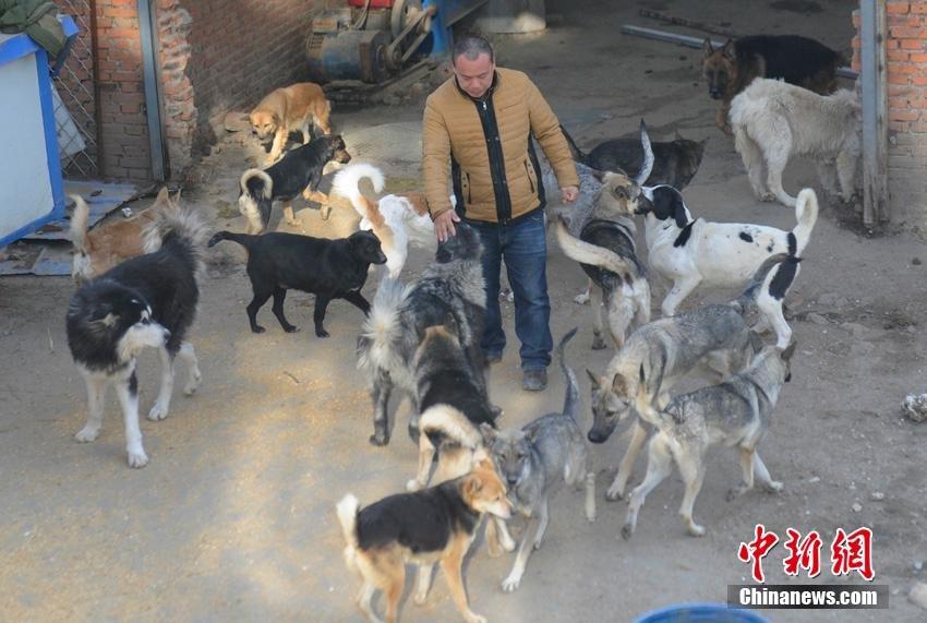 changchun-man-rescues-stray-dogs1245.jpg