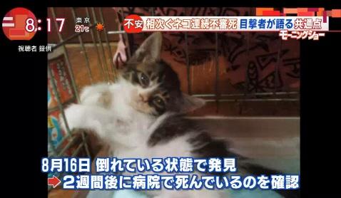 hatori1.jpg