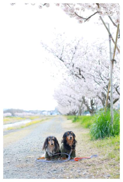2016-04-03-03.jpg