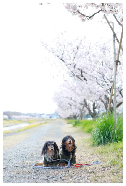 2016-04-03-04.jpg