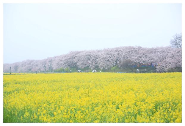 2016-04-06-01.jpg