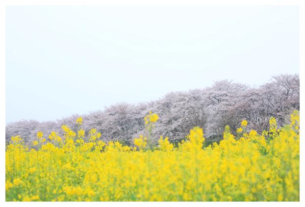 2016-04-06-02.jpg