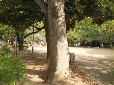 薬園台公園
