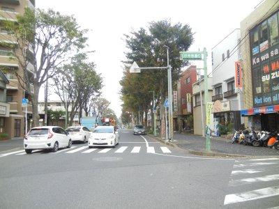 旅団街道・戦車道(けやき通り)