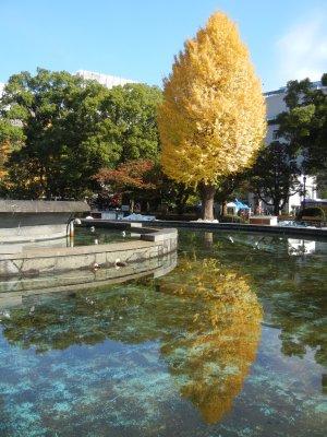 噴水横のイチョウの黄葉