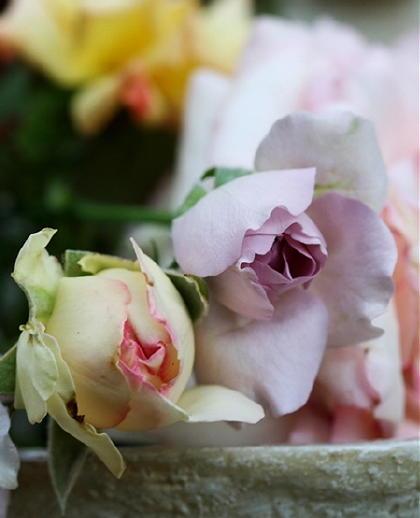 薔薇ぶーけ