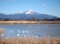 湖北と伊吹山