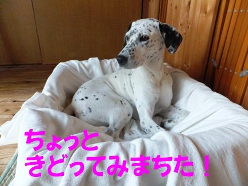 blog_1023_081407.jpg