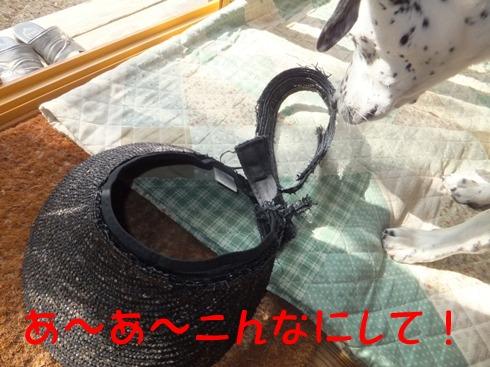 blog_1031_134705.jpg