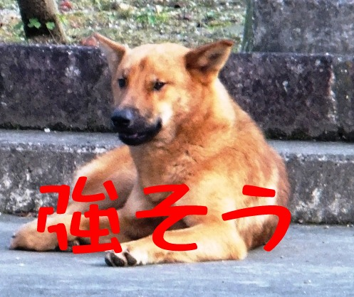 blog_1115_160714.jpg