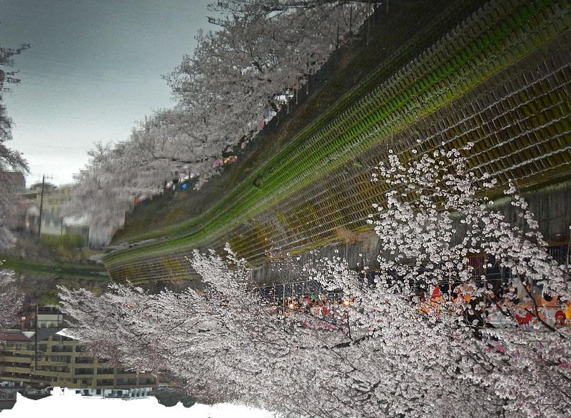160402大岡川桜並木,昼休み6