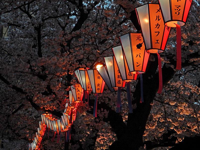 160406大岡川桜並木,黄昏編7