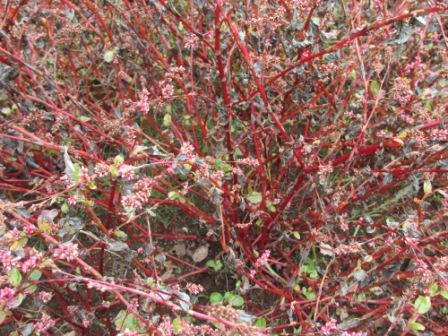 藍の茎の紅葉
