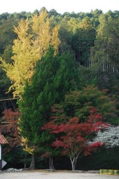 黄葉・緑葉・紅葉