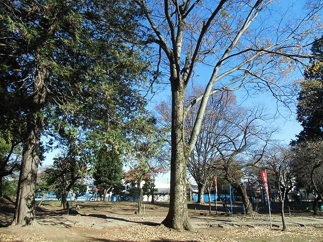 昔遊んだ公園